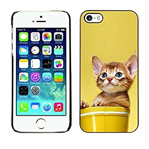YOYO Slim PC / Aluminium Case Cover Armor Shell Portection //Cute Cat Kitten In A Pot //Apple Iphone 5 / 5S