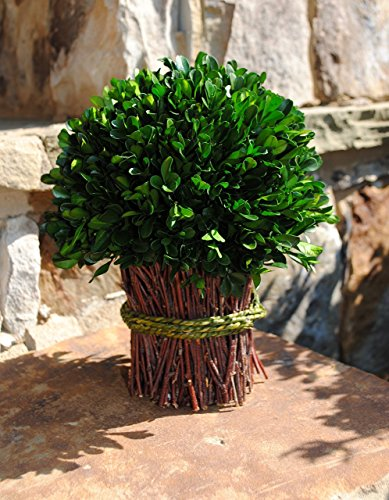 Preserved Real Boxwood Bouquet for Weddings or Home Decor Accent in 10 Inch Diameter