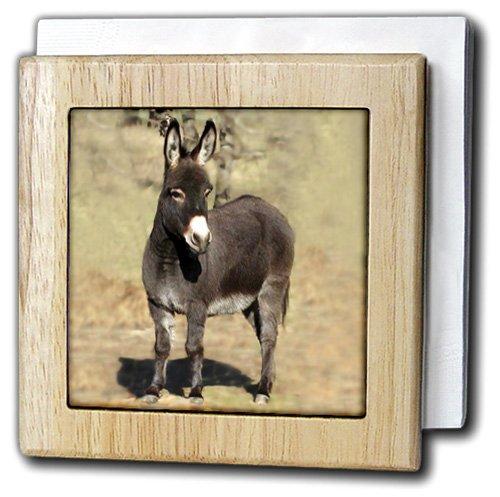 3droseファーム動物 – ミニチュアDonkey – タイルナプキンホルダー 6 inch tile napkin holder nh_1236_1 6 inch tile napkin holder  B000MBTAZI