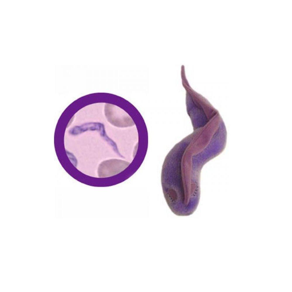 GiantMicrobes - Peluche de parásito causante de la enfermedad del ...