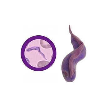GiantMicrobes - Peluche de parásito causante de la enfermedad del sueño