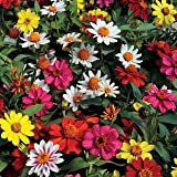 Zinnia Seeds, Zahara Mix Zinnia Flower, Seed Pack, Beautiful Annuals, Treasuresbylee Seed Pack