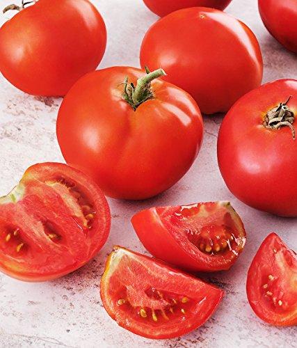 Creole Tomato 250 Seeds Non GMO Vegetables Home Garden