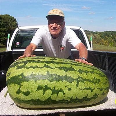 LIODER 50 Pcs Giant Watermelon Seeds Summer Fruit Seeds : Garden & Outdoor