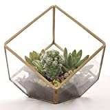 Ling's Moment Glass Terrarium  Noted: Succulent plants NOT included.  Dimensions:  Length: 5.7 inches  Width: 6.1 inches  Height: 5.7 inches  Material: Brass & Glass  Noted: It's NOT a water tight container.  Filling the small gap with Cl...