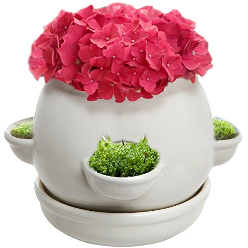 (Decorative 4 Side Openings Design White Ceramic Plant Flower Container Pot with Saucer)