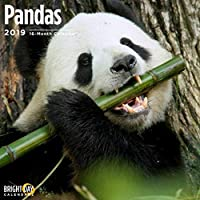 Pandas 2019 16 Month Wall Calendar 12 x 12 Inches