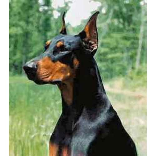 on sale Dean and Tyler Wire Basket Muzzle, Size No. D3 - Extra Large Doberman