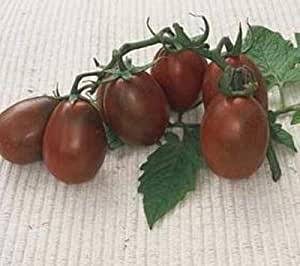 Black Plum Paste Tomato Seeds