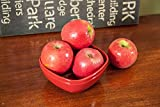 1 Starter Live Plant of Anna Apple Tree