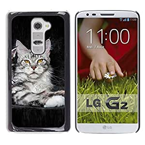 LECELL -- Funda protectora / Cubierta / Piel For LG G2 D800 D802 D802TA D803 VS980 LS980 -- koshka kotenok fon --