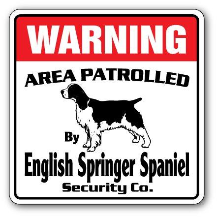 English Springer Spaniel Puppies - 9