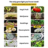 LED Grow Light Bulb - for Indoor Plants Full