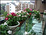 50Seeds/Bag, Rose Red Color Madagascar Periwinkle
