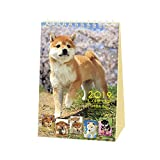 Shiba Inu Calendar 2019 with Adorable Shiba Dogs' Pictures (Desktop Calendar 7.00 x 4.88 inch) US Holidays & Japanese Holidays | in English | Made in Japan