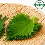 Gaea's Blessing Seeds - Green Shiso Seeds (Perilla) 400+ Seeds, Non-GMO, Kaori Ao Shiso, Open-Pollinated, 94% Germination Rate