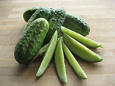 50 National Pickling Cucumber Seeds