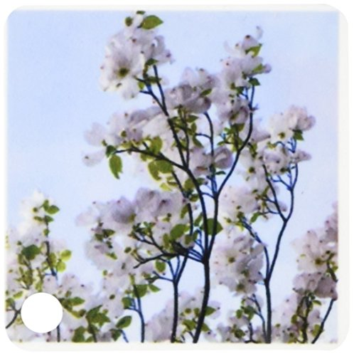 3drose-pretty-white-flowering-tree-zen-inspirations-key-chains-225-x-45-inches-set-of-2-kc-30899-1