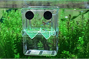 Acuario acrílico Guppy bebé peces pequeños - separación Hatch caja cría caja AUTO flotador: Amazon.es: Productos para mascotas