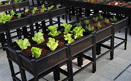 Large Raised Vegetable Planter by City Farmer USA
