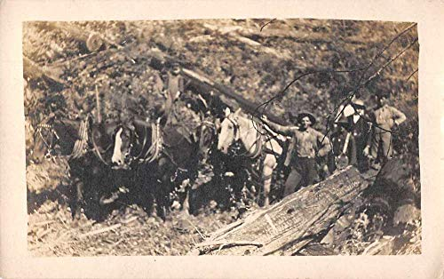 Port Gamble Washington Horse Team Logging Real Photo Postcard - Horse Washington
