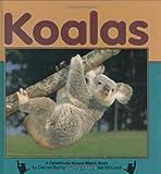Koalas, Denise Burt, 1575053802