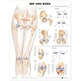 anatomical body parts - Hip and Knee Anatomical Chart