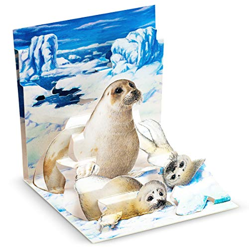 Mother Harp Seal - Happy Birthday Cards - Holiday Greeting Card, Graduation, Wedding, Anniversary Cards - for Wife Husband Kids Friends w/ Mailing Envelope  (1 Pack, Harp Seals)