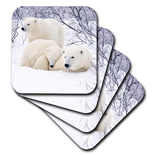 (3dRose Churchill Wildlife Management Area - Polar Bears and Two Cubs - Ceramic Tile Coasters, Set of 4 (CST_207606_3))