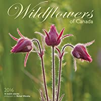 Wildflowers Of Canada 2016 Square 12x12  Wall Calendar