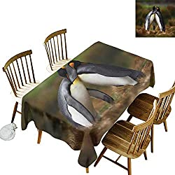 W Machine Sky Dustproof Rectangular Tablecloth Animal Penguins Cuddling in Wild Nature Love Valentines Affection Romance Falkland Islands W70 xL90 for Family Dinners,Parties,Everyday Use