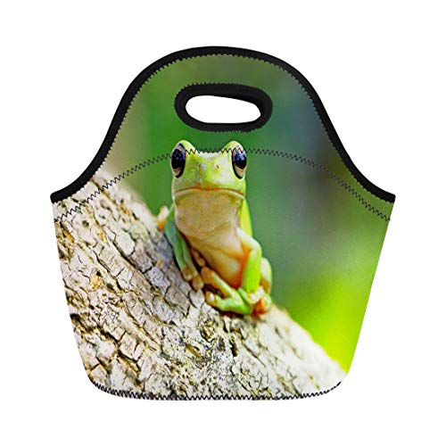 Semtomn Lunch Bags Amphibious Colorful Adorable Dumpy Frog Tree Green Amphibian Animal Neoprene Lunch Bag Lunchbox Tote Bag Portable Picnic Bag Cooler Bag