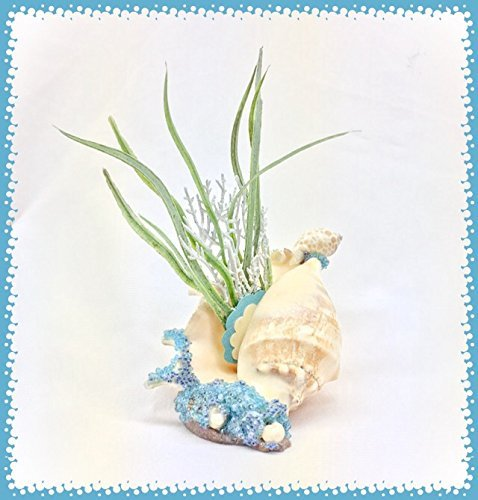 Junonias Seashell (Splashing Waves Spider Conch ~ Planter (faux plant included))