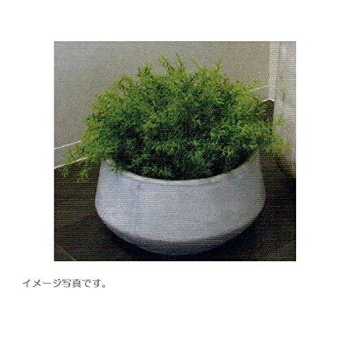 人工観葉植物 アーティフィシャルグリーンアレンジ 鉢付き 幅50cm rg-009 B074FX5CVF