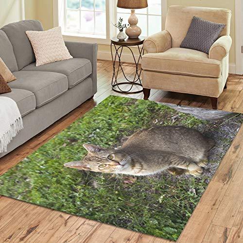 Lucky High Cold Cat Large Custom Non-Slip Modern Floor Area Rug Pad Mat Oriental Commercial Carpet for Basement Bedroom Living Room Kitchen Home Decor 5' X 7' Indoor