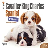 Cavalier King Charles Spaniel Puppies 2016 Mini 7x7 (Multilingual Edition)