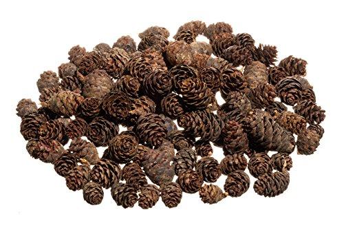 Real Pine Cone - Pine Cones | Small Pine Cones | Mini Black Spruce Pine Cones | Pine Cone Filler | Nautical Crush Trading TM (8 Ounces)