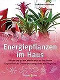 Energiepflanzen im Haus: Welche uns gut tun, welche nicht zu uns passen. Ungewöhnliche Zimmerpflanzenporträts mit Pflegetips