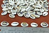 210+ Pcs Bulk Cut Sea Shell Loose Beads Cowrie One Pound