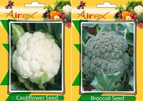 Shopmeeko Seed Cauliflower and Broccoli Vegetables Seed + Humic (for Growth of All and Better Responce) 15 gm Humic + Pack of 30 Seed Cauliflower + 30 Broccoli Seed (30 per Packet)