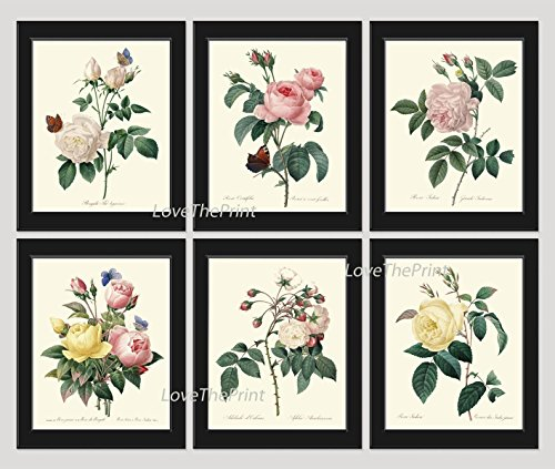 (Botanical Print Set of 6 Antique Beautiful Redoute Roses Pink Yellow White Butterfly Garden Nature Plant Flowers Home Room Decor Wall Art Unframed)