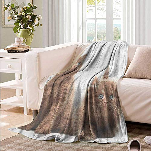 Oncegod Soft Warm Coral Fleece Blanket Animal Cute Kitten Kids Recliner Throw,Couch Throw, Couch wrap 60