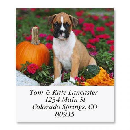 Boxer Pup Square Return Address Labels - Set of 144 1-1/8