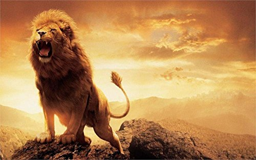 60x80 Blanket Comfort Warmth Soft Plush Throw for Couch Fashion Animal narnia lion aslan ()