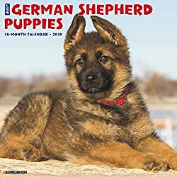 Just German Shepherd Puppies 2020 Wall Calendar (Dog Breed Calendar)
