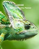 2020 Weekly and Monthly Planner: Lizard - Monthly Calendar with U.S./UK/ Canadian/Christian/Jewish/Muslim Holidays- Calendar in Review/Notes 8 x 10 in. Reptiles Animal Nature