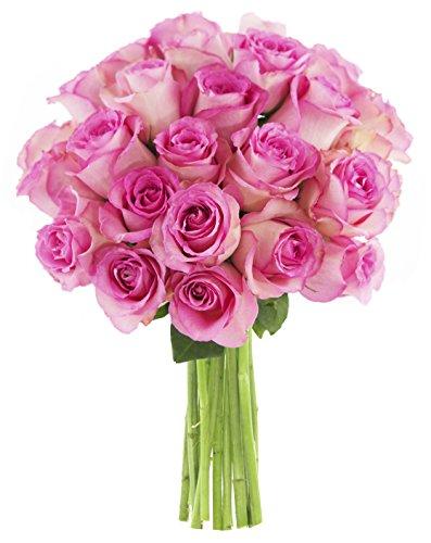KaBloom Sweet Pink Bouquet of 18 Fresh Cut Pink Roses (Farm-Fresh, Long-Stem)