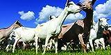Nature's Seed 0.5 Acre Florida Tropics Goat Pasture Blend