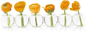 "Caterpillar, Clear Glass Bud Vase 10.25"" Long 1"" Wide 1.5"" Tall for Short Flowers, Unique Low Sitting Flower Vase, Cute Floral Vase for Home Decor, Weddings, Floral Arrangements, Arranging"