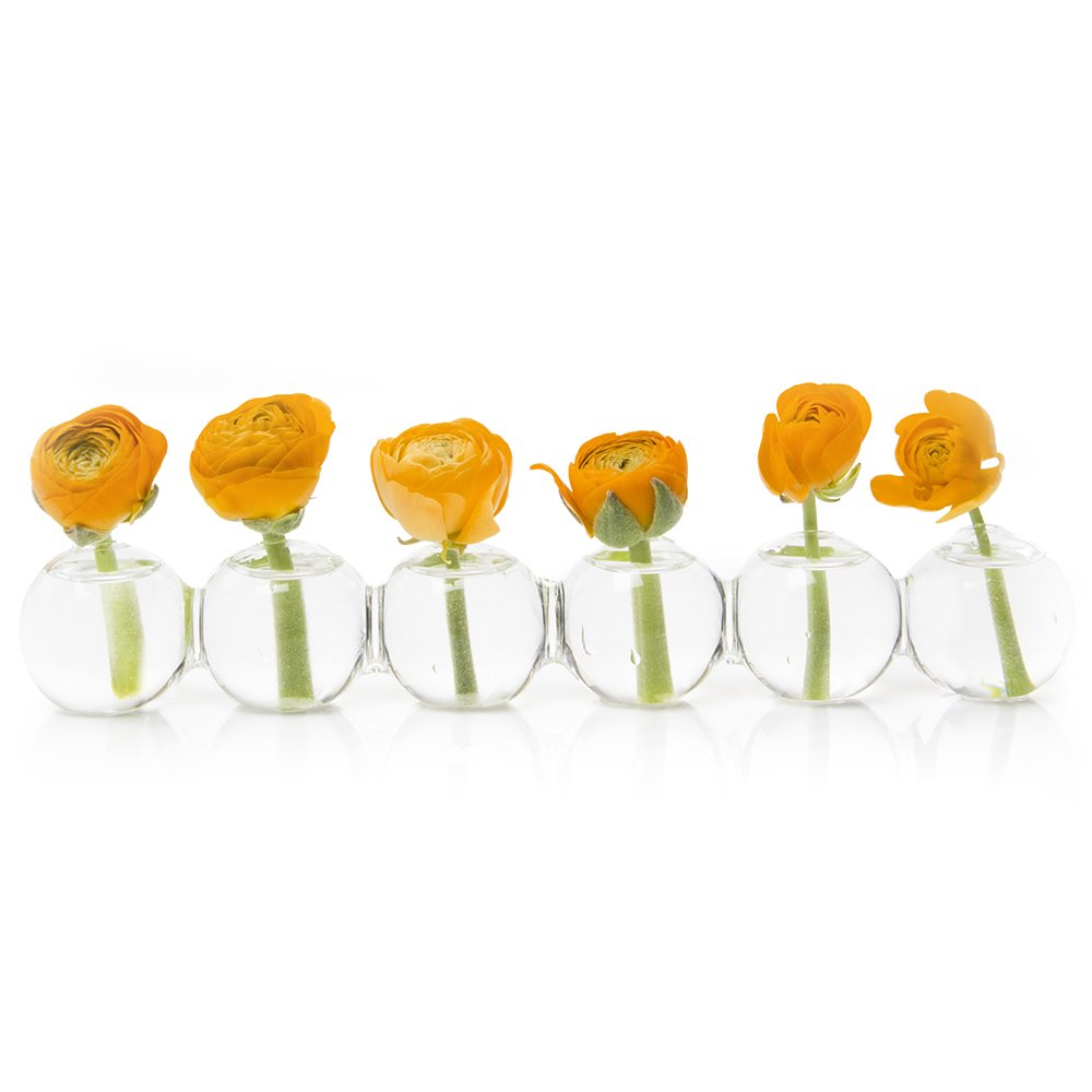 Chive – Caterpillar, Small Clear Glass Bud Vase for Short Flowers, Unique Low Sitting Flower Vase, Cute Floral Vase for Home Decor, Weddings, Floral Arrangements, Arranging, Set of 6 Round Balls by Chive